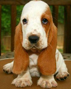 Ears / Follows @thedogsmile  TAG your Friends   #dog #dogs #dogsofinstagram #doggo #doginstagram #instadog #dogood #doggram #doghappy #lovedog #lovedogs #doglover #doglovers #pets #petsofinstagram #cute #puppy #puppylove #dogoftheday #ilovemydog  #dogstagram #mydog #mypets #doggy #dogs_of_instagram #instagramdogs #dogdailyfeaturesss #perro #perros #perrosdeinstagram