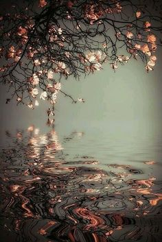 Image uploaded by dancemacabre. Find images and videos about beautiful, photography and pink on We Heart It - the app to get lost in what you love. Beautiful World, Beautiful Images, Beautiful Flowers, Amazing Photography, Nature Photography, Reflection Photography, Reflection Photos, Storm Photography, Spring Photography
