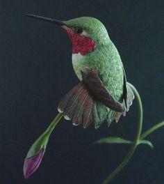 broad-tailed-hummer.jpg (715×800)