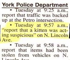 You know, when kittens make the local newspaper police blotter, that's the town for me.