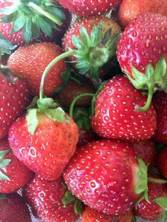 One Chicago mom's adventures in strawberry picking