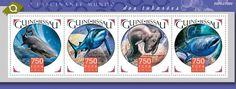 GB15911a Sharks (Negaprion brevirostris, Carcharhinus melanopterus, Chlamydoselachus anguineus, Rhincodon typus)