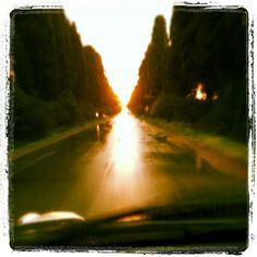Bolgheri,  viale dei cipressi