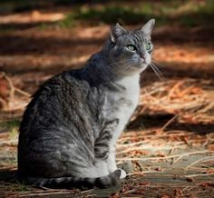 Our cat Wicket. Dave & Page, Lake Tahoe, CA. 12/28/12.