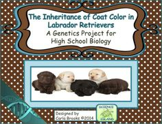 Inheritance of Coat Color in Labrador Retrievers has been the all time favorite project of my Biology students for over 10 years and I'm sure your students will love it, too! It's a real-world scenario about inheritance patterns in one of America's favorite dog breeds.