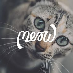 My first attempt at a Ambigram aka it should still read meow if you look at it upside down. Photo by Chaiyaporn Atakampeewong @unsplash #cats #handlettering #lettering #typography #meow #type #goodtype #photography #pets #design by ianbarnard