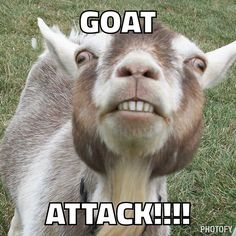 Goat Attack, A New Service That Lets Users Pay to Text Bomb Friends or Enemies With a Stream of Goat Photos and Puns