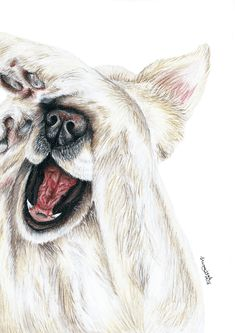 Golden Retriever, Pet Dogs, Dogs And Puppies, Pug Art, Amazing Paintings, Color Pencil Art, Animal Drawings, Pet Portraits, Painting & Drawing