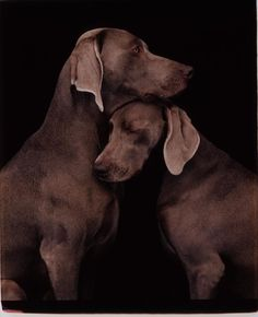 William Wegman- I <3 this.