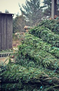 my grandparents sold christmas trees when i was young - Christmas Tree Farms In Ohio