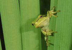 Frog 2d :)