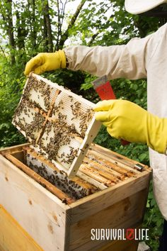 There's nothing like the sweetness of honey, and when SHTF you can sustain yourself with a supply of it. Beekeeping gives us many useful products and food, including honey and beeswax. Beeswax is used for both candles and soap, and honey has dozens of uses. #beekeeping #survivalskill #survivaltips #survivallife