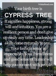 Your Birth Tree: Cypress Tree  February