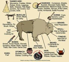 Indian uses of the buffalo