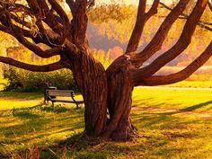 paisajes de amor eterno imagenes hermosas fotos enamorados fondos wallpaper arbol otoño