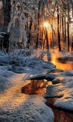 Ideas For Winter Landscape Photography Christmas Woods Winter Pictures, Nature Pictures, Sunrise Pictures, Winter Photography, Landscape Photography, Tree Photography, Sunrise Photography, Scenic Photography, Beautiful World