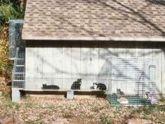 Cat run-I wish this picture was clearer.  I want to try doing this.
