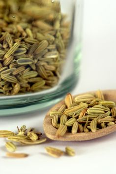How to Harvest Fennel Seeds | Grow This!