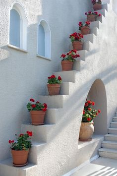 Potted Geraniums on the steps - Santorini