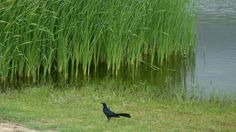 Maravillosa fauna - Parque Tayrona  reservas@magictourcolombia.com #wetakeyouthere