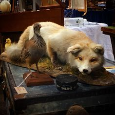 #spitalfields #taxidermy #oldspitalfields #oldspitalfieldsmarket #spitalfieldsmarket #... | Use Instagram online! Websta is the Best Instagram Web Viewer!