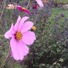 Schnittblumen Blumen Samen