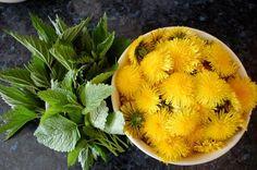 Pampeliško-kopřivový sirup s meduňkou ~ Ze zahrady do kuchyně Healing Herbs, Medicinal Herbs, Happy Vegan, Home Bakery, Home Canning, Sweet Desserts, Natural Medicine, Organic Beauty, Healthy Drinks