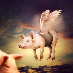 Google Afbeeldingen resultaat voor http://www.designknock.com/wp-content/uploads/2012/03/Photo-Manipulate-a-Cute-Flying-Pig-Scene.jpg