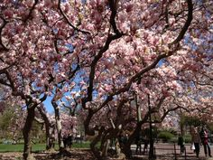 Central Park. 2013