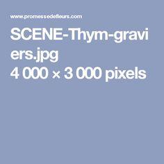 SCENE-Thym-graviers.jpg 4000×3000 pixels