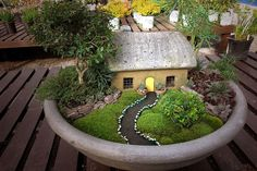 please view large. today, I'm sharing with you something very beautiful my friend John Millman made.To make this little garden, he used real plants such as moss from the side of our building, echeveria (a type of succulent), hens&chicks, weeping rosemary, creeping thyme, a bonsai tree, a small mundo grass, kingsville boxwood, several more plants I cannot remember the names right now, black fine sand, rocks and little bamboo sticks. I think it is quite impressive....dont you???