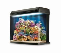 This custom LED has the spectrum to grow massive corals! Read more about this modification! Marine Aquarium, Underwater Creatures, Tropical, Corals, Gallery, Spectrum, Pictures, Led, Photos