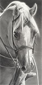 "Hawkeye by Mary Ross Buchholz Graphite & Charcoal ~ 18"" x 9"""