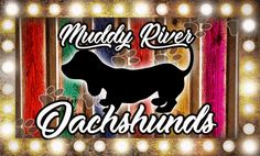 Muddy River Dachshunds offers AKC Miniature dachshund puppies for sale. Our goal is to be one of the best miniature dachshund breeders around. We are located in south Texas Miniature Dachshund Breeders, Mini Schnauzer Puppies, Dachshund Puppies For Sale, Cream Dachshund, Dapple Dachshund, Weimaraner Puppies, Puppy Names, Dog Costumes, Happy Animals