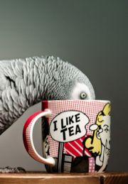 b i r d                                                          African Grey at tea time