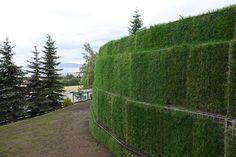 Spørsmål angående 70 meter med støttemur opptil 4,5 meters høyde - 20130904-DSC03530.jpg - jesss