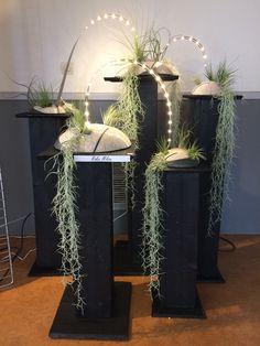 Creations, Plants, Plant, Planets