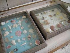 vintage seashell specimen boxes