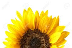 sunflower head - Google Search