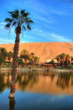 Oasis en medio del desierto de Ica Huacachina, Ica - Perú. There's even a camel here.