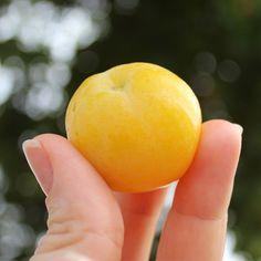 Frutas de A a Z - Cagaita