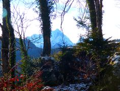 Alpine View - Jon Lander - © 2016 - Hohenschwangau, Bavaria, Germany