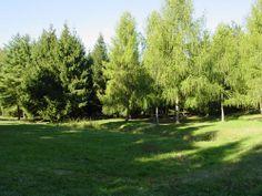 Bosco Parco di Superga