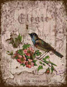 Shabbylishious: Inspirations and dreams Vintage Birds, Vintage Flowers, Vintage Prints, Vintage Art, Decoupage Vintage, Vintage Ephemera, French Images, Vintage Images, Bird Stencil