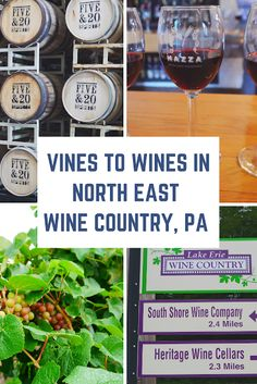 From Vines to Wines in North East Wine Country, PA Culinary Chef, Erie County, Great Lakes Region, Travel Tips, Travel Guides, Lake Erie, Best Blogs, Foodie Travel, Wine Country