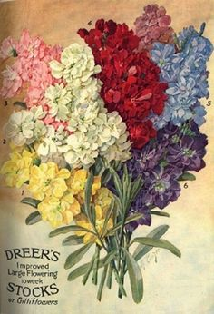 Early 19th Century Seed Catalogue Covers And Packets