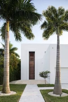 Image result for palm tree base landscaping