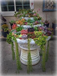 Nice succulent fountain by Darlina Marquez