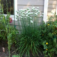 Self-Seeding Crops: Plant Once and Forget 'Em  - Organic Gardening - MOTHER EARTH NEWS