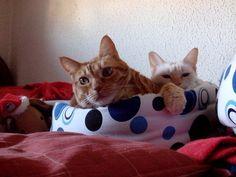 Pumicu i Nani Sanchez #gato #veterinario www.veterinario.es